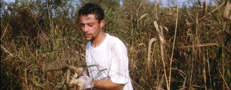 Recépage de saules dan sun marais lors d'un chantier nature Blongios