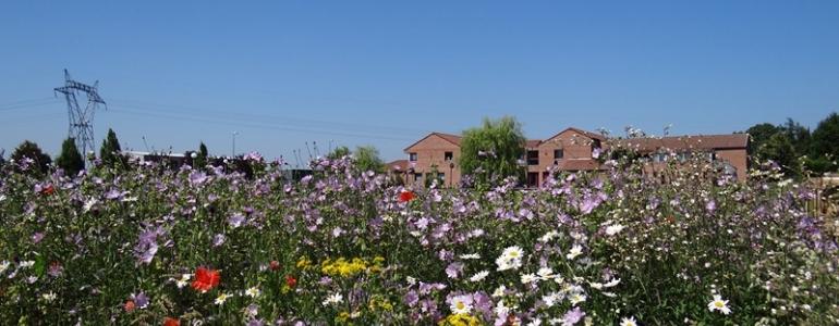 La prairie fleurie en été 2013