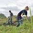 Les Blongios organisent régulièrement des chantiers d'éco-volontariat dans les Hauts-de-France. PHOTO PATRICK JAMES