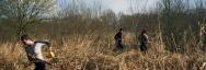 Débroussaillage d'un marais lors d'un chantier nature