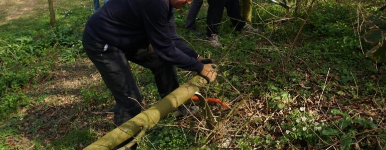 Le premier arbre coupé.