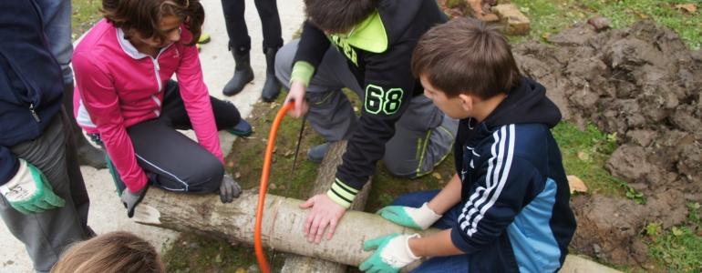 Récupération de troncs d'arbres pour la solidité de l'ensemble.