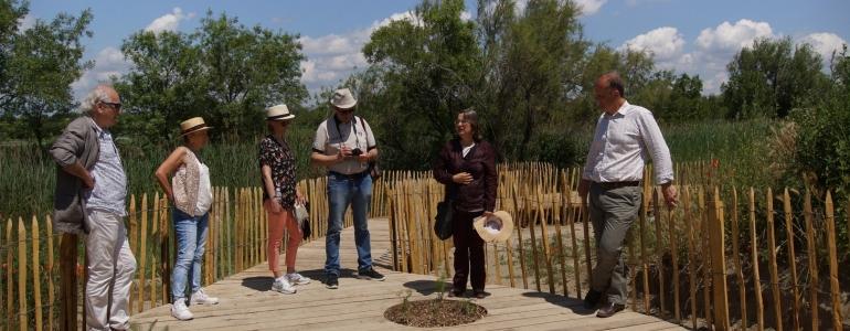 Présentation du Fenouil (Foeniculum vulgare) par une botaniste de la Station Biologique de la Tour du Valat