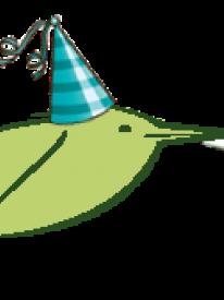 anniversaire Blongios